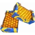 1 volle doos pers sinaasappels 15 kilo