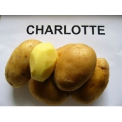 1 kilo Charlotte aardappels